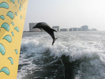 Dolphin Sightings