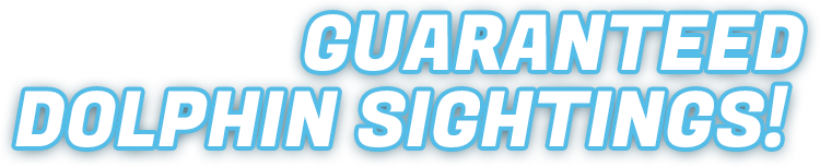 Guaranteed Dolphin Sightings!